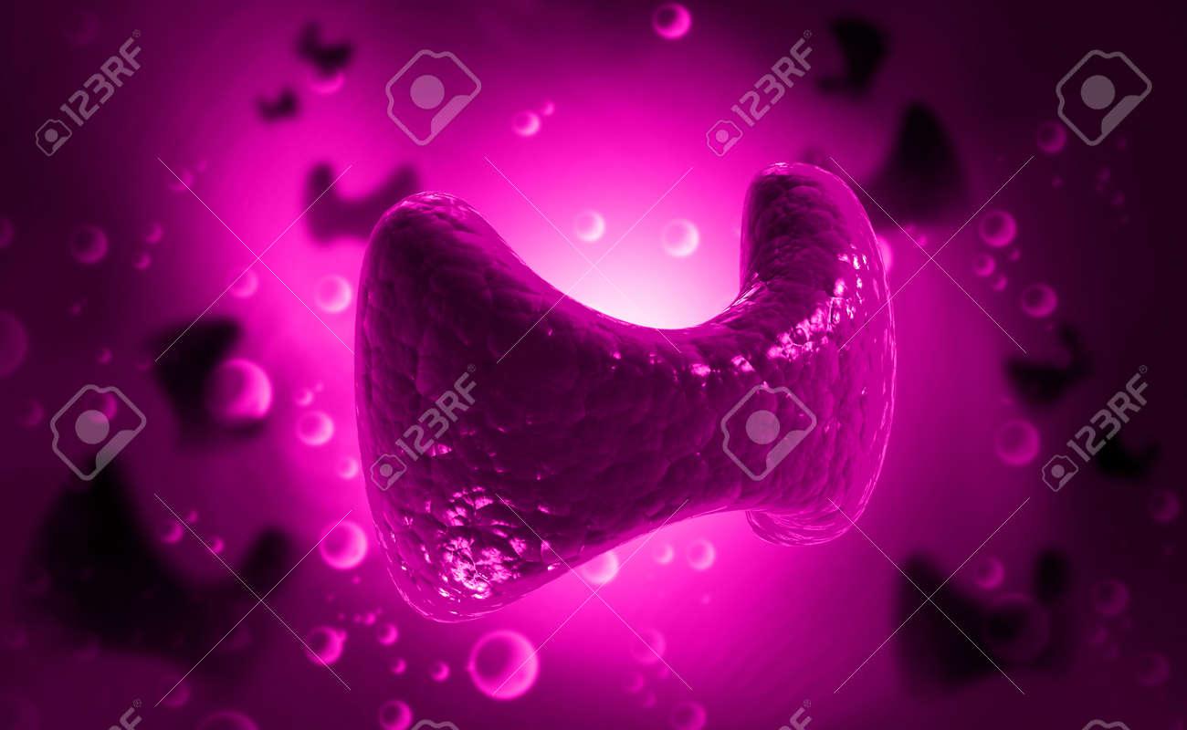 Endokrine Nebenschilddrüse Isoliert Farbe Lizenzfreie Fotos, Bilder ...