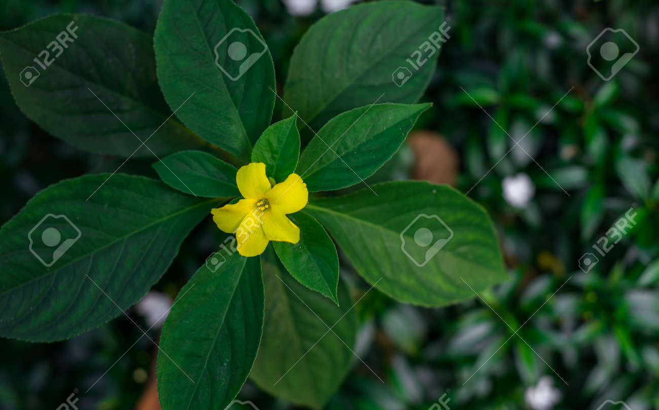 An yellow flower at the center of the plant branch giving an stock an yellow flower at the center of the plant branch giving an even look from top mightylinksfo