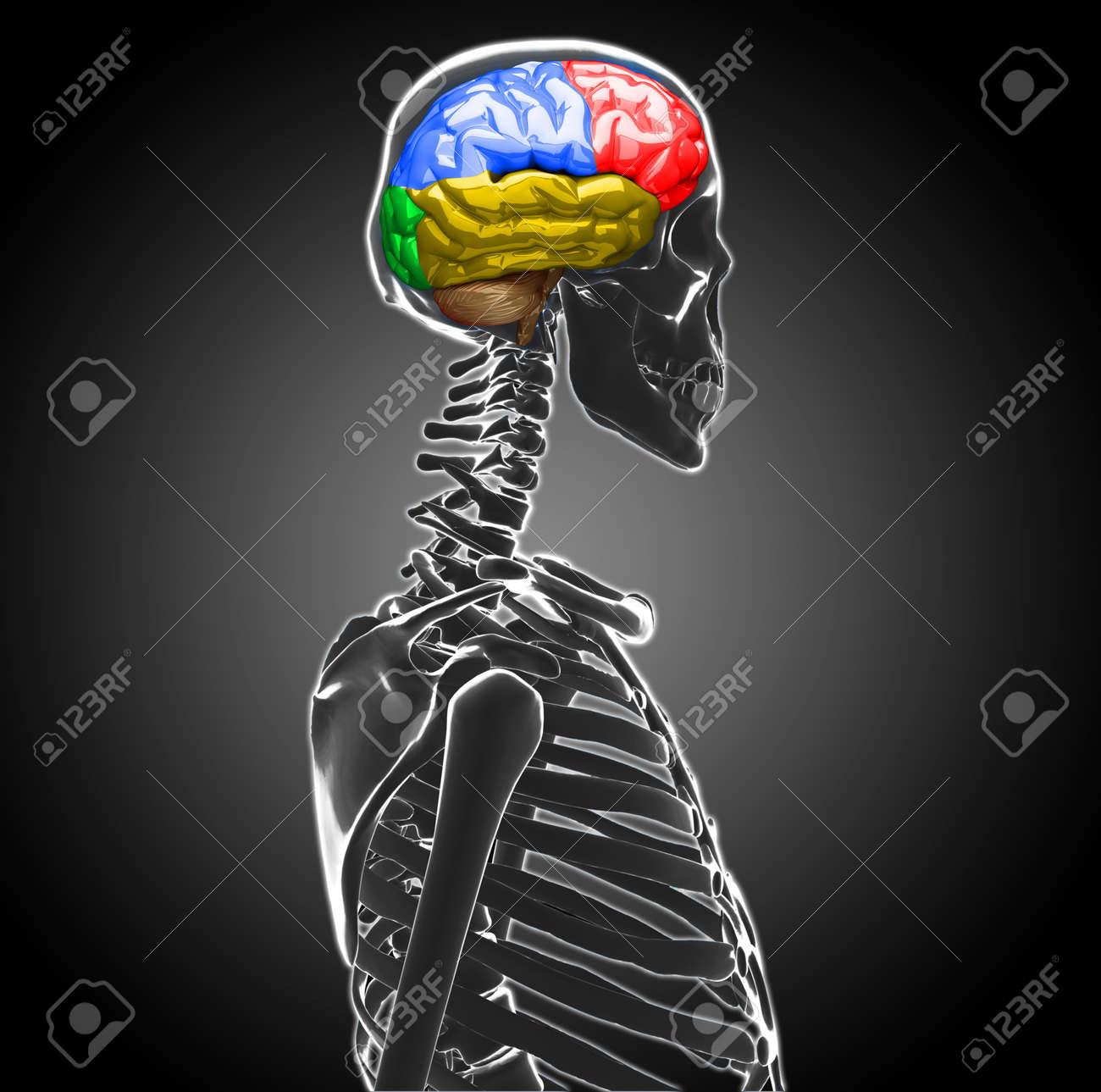 human brain Stock Photo - 20945641