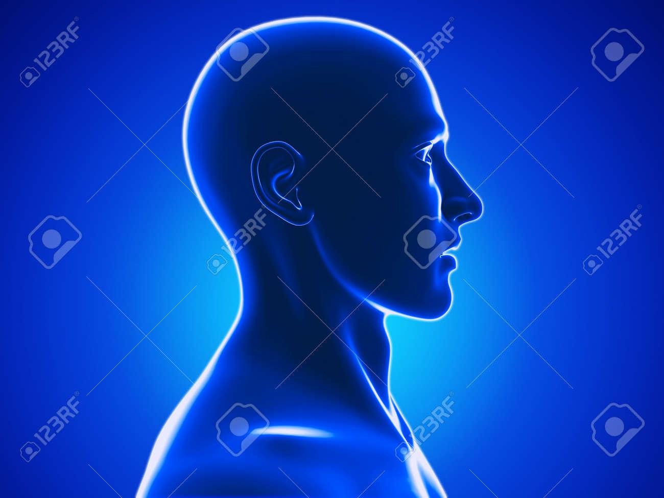 human head Stock Photo - 20945700