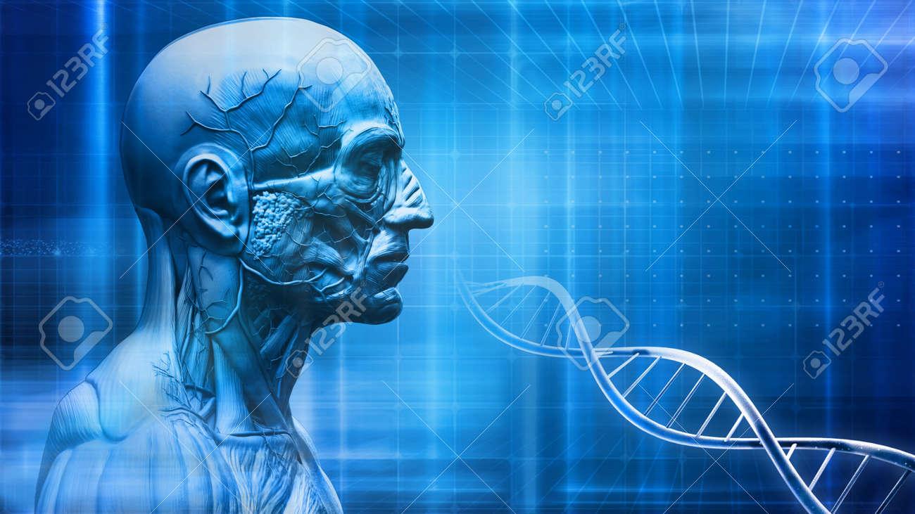 Menschlichen Körper Anatomie Hintergrund Mit DNA Lizenzfreie Fotos ...