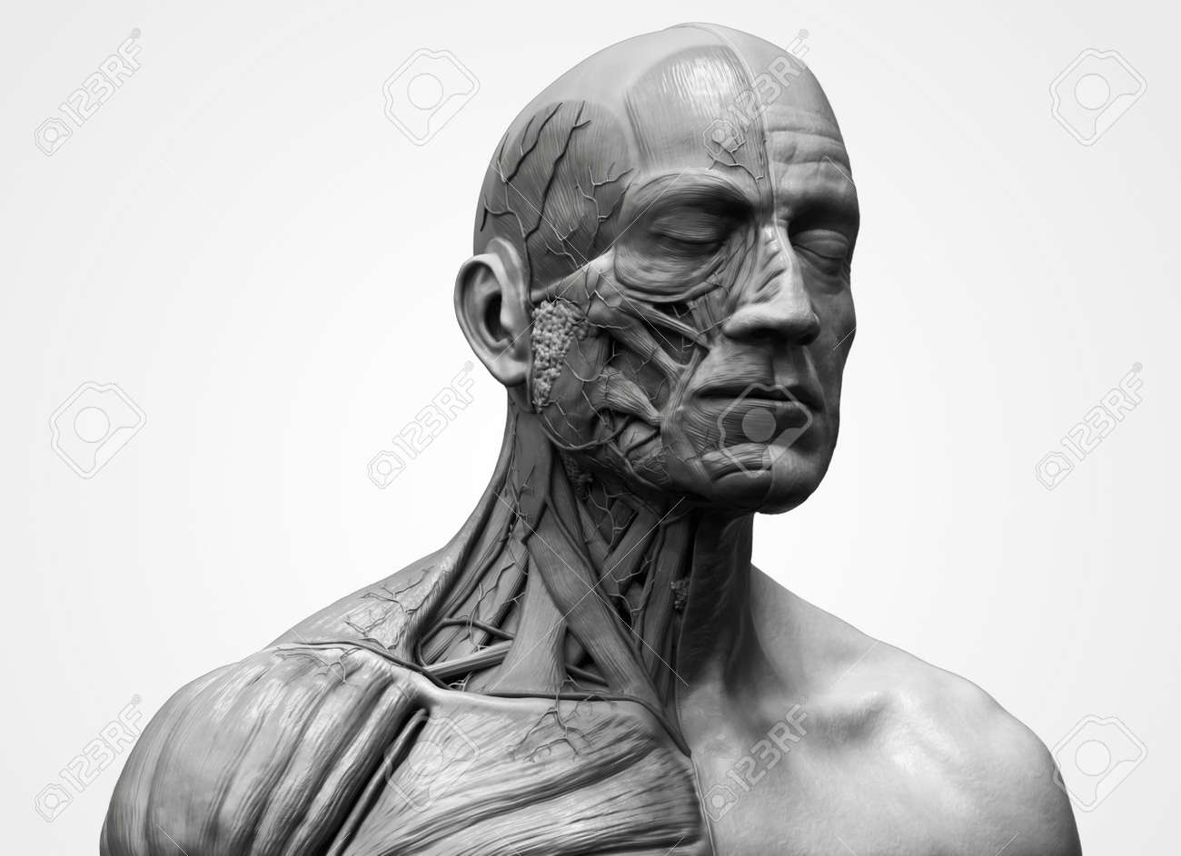 Human Body Anatomy - Muscle Anatomy Of The Face Neck And Chest ...