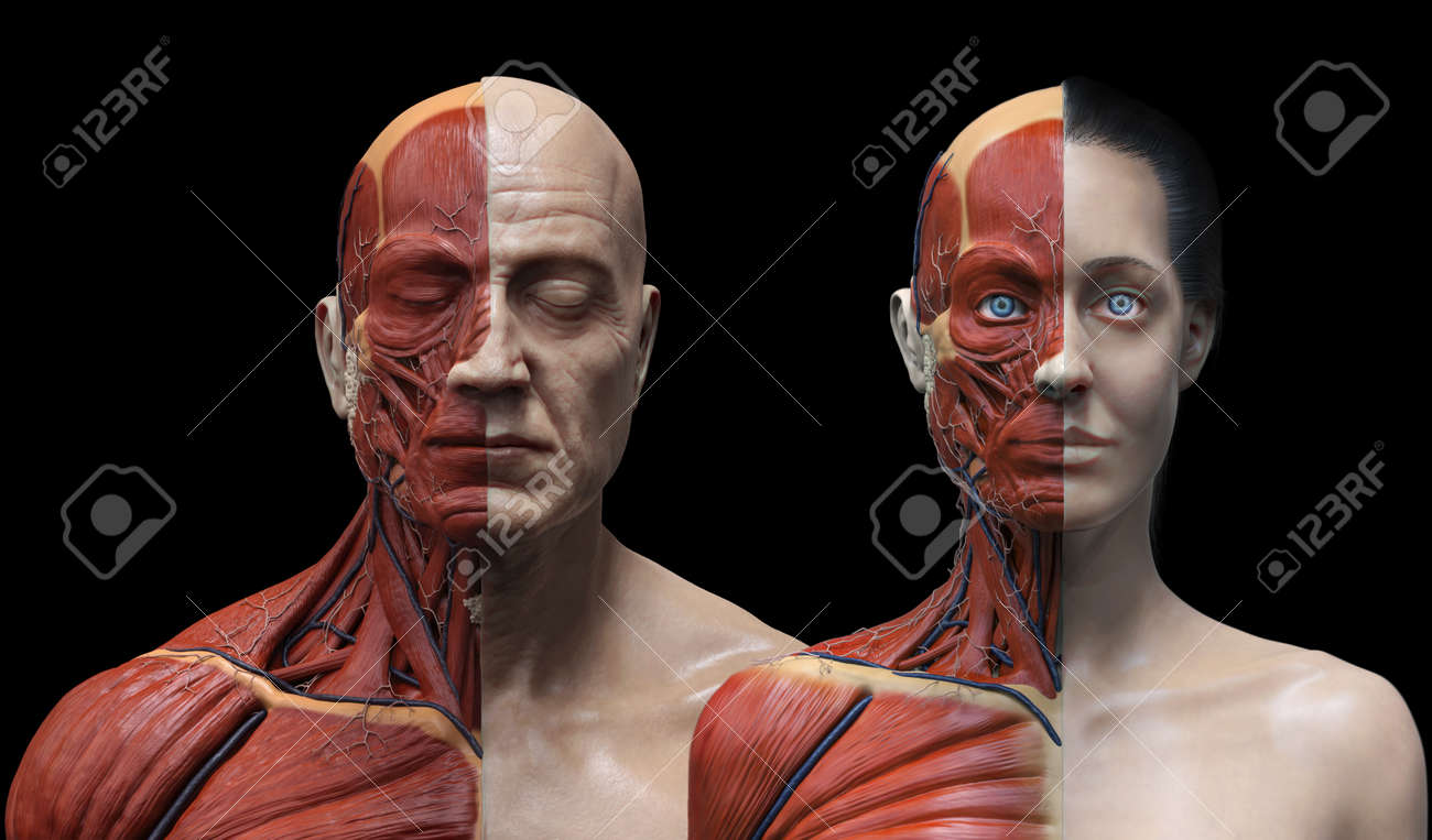Male And Female Anatomy Background , Medical Reference Image.. Stock ...