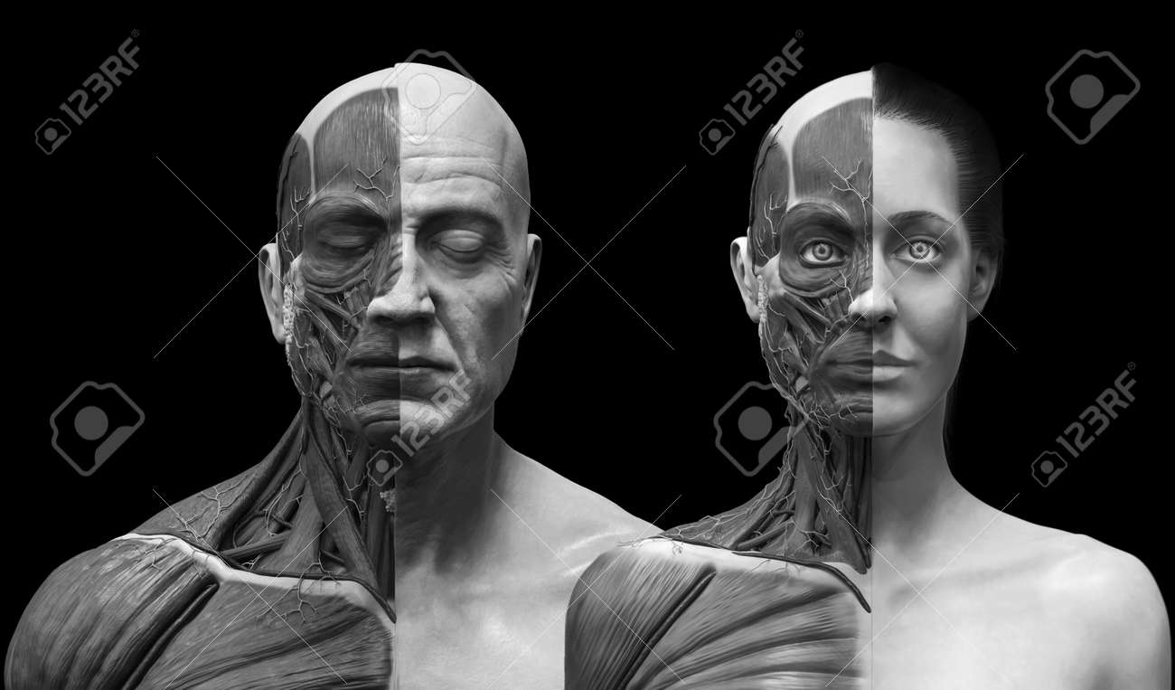 Male And Female Anatomy Background Medical Reference Image Stock