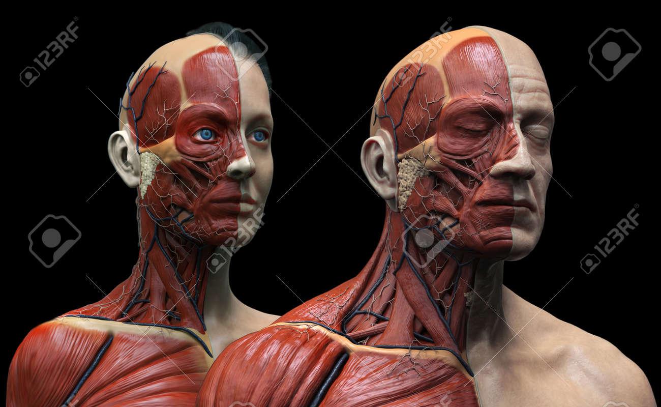 La Anatomía Del Cuerpo Humano, Aislado Anatomía Masculina Y Femenina ...
