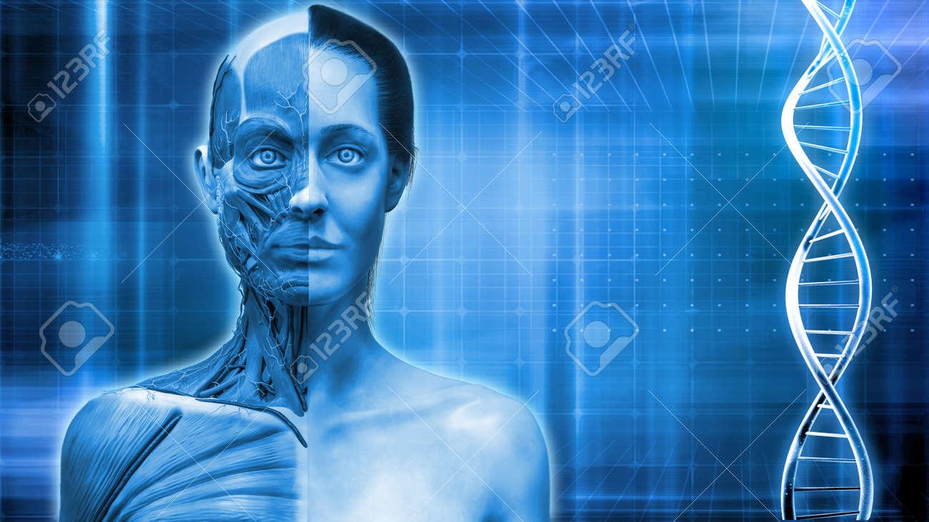 Médica De ADN De Fondo, La Anatomía Del Músculo Del Cuello Cara Y El ...