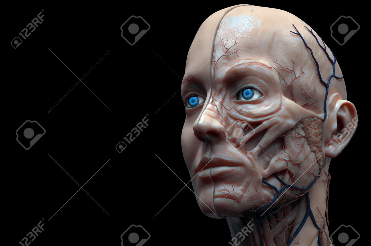 Human Body Anatomy Background , Medical Background With The Head ...