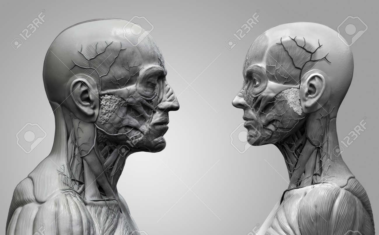 Der Menschliche Körper Anatomie Hintergrund, Männlich Und Weiblich ...