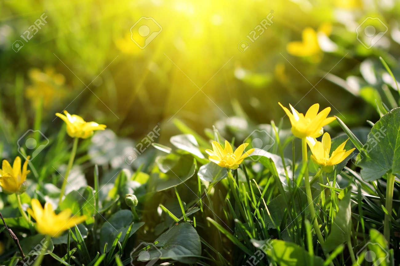 Pequenas Flores Lindas De La Primavera Fotos Retratos Imagenes Y