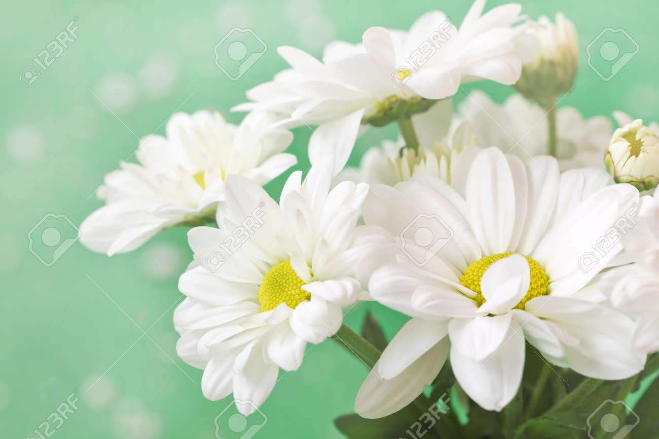 152c832db1dfb lovely chamomiles on a delicate pale green background Stock Photo - 26966608