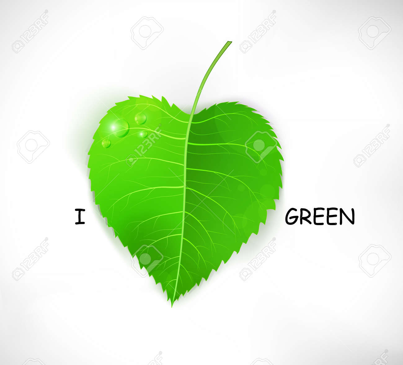 I love green. Fresh realistic vector leaf isolated on white. Stock Vector - 15528029