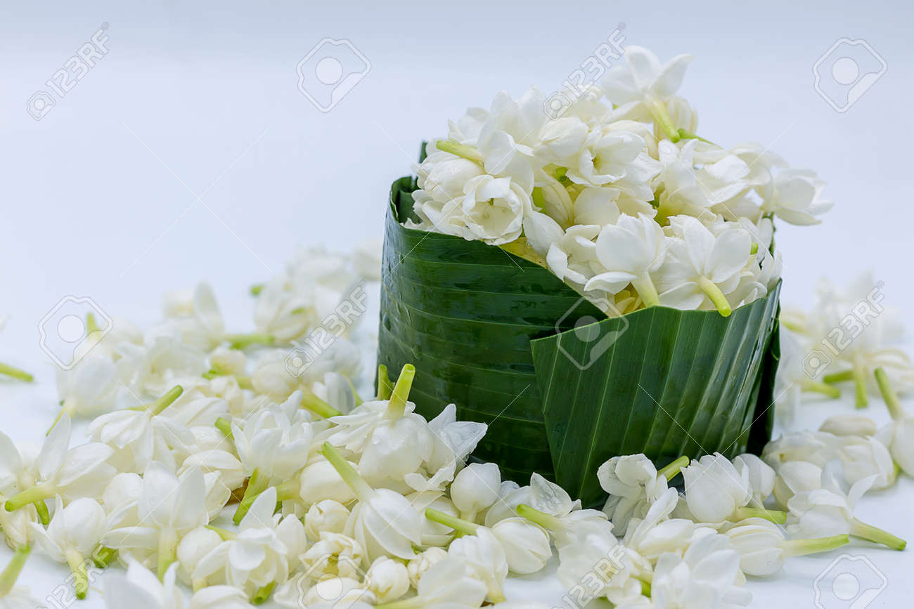 Jasmine White Flowers On White Background Stock Photo Picture And