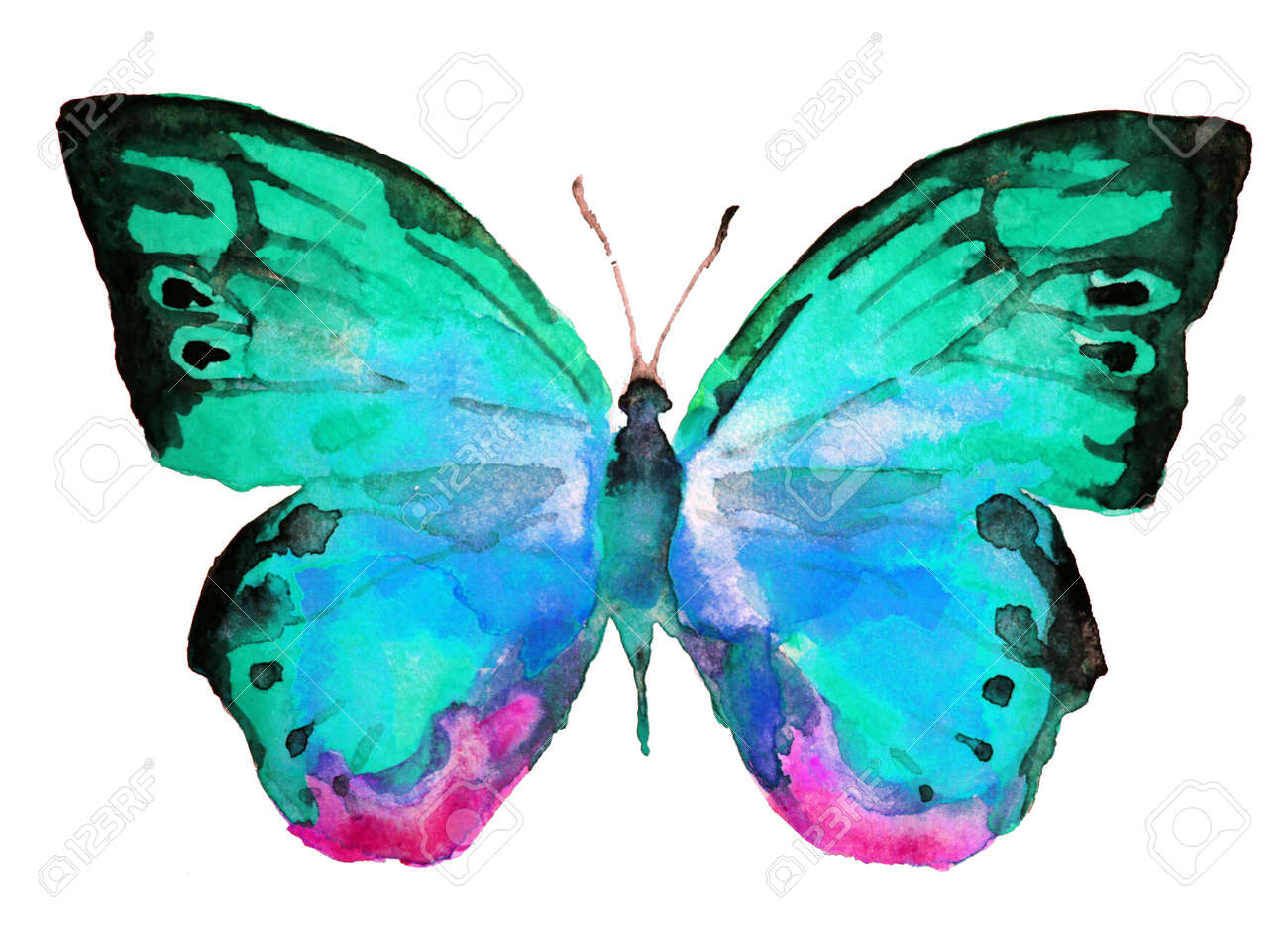 butterfly, watercolor Stock Photo - 22181887