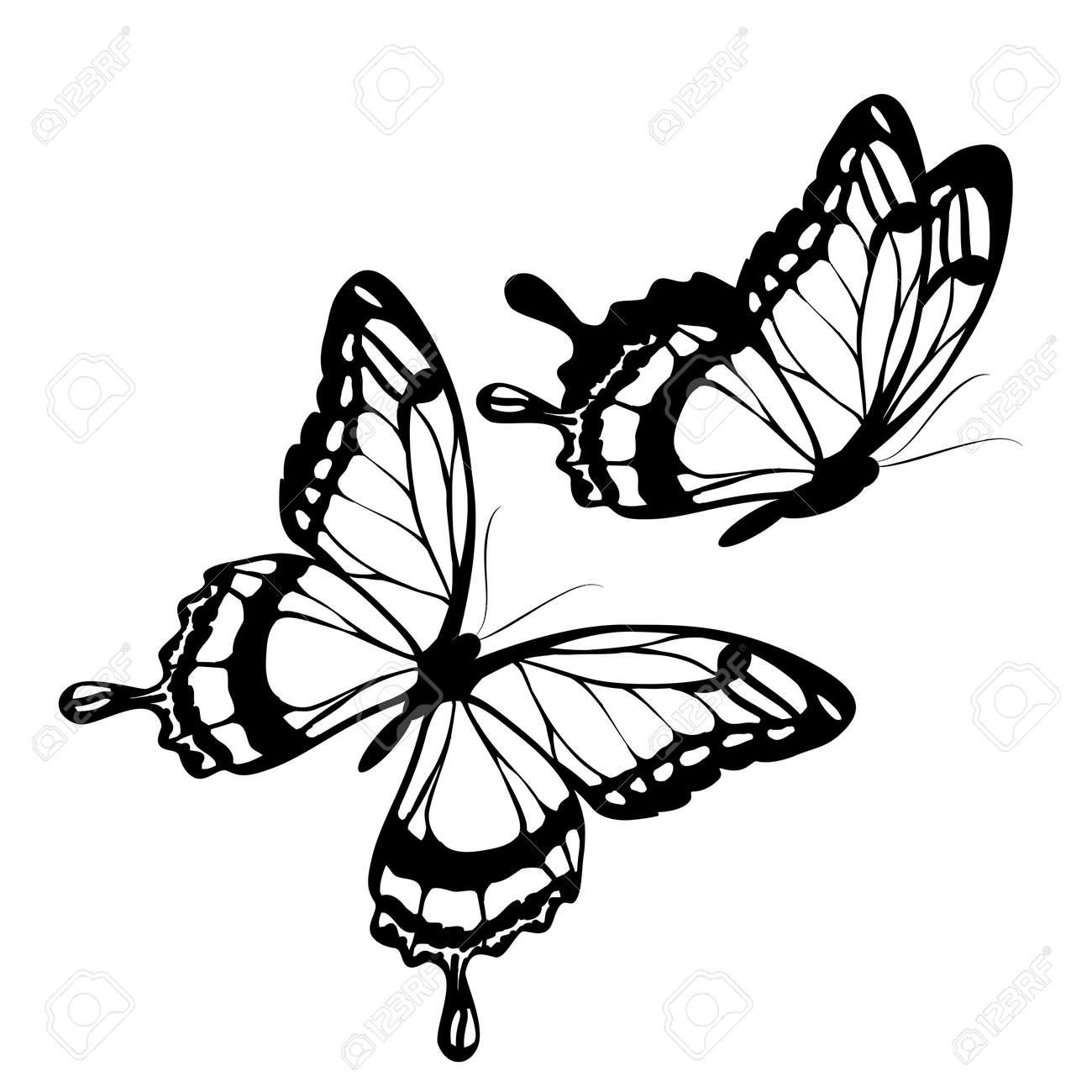 butterflies design - 51370285