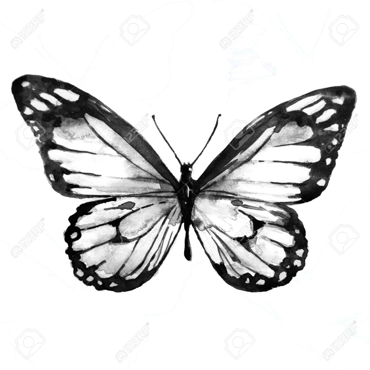 Black butterflywatercolor isolated on a white