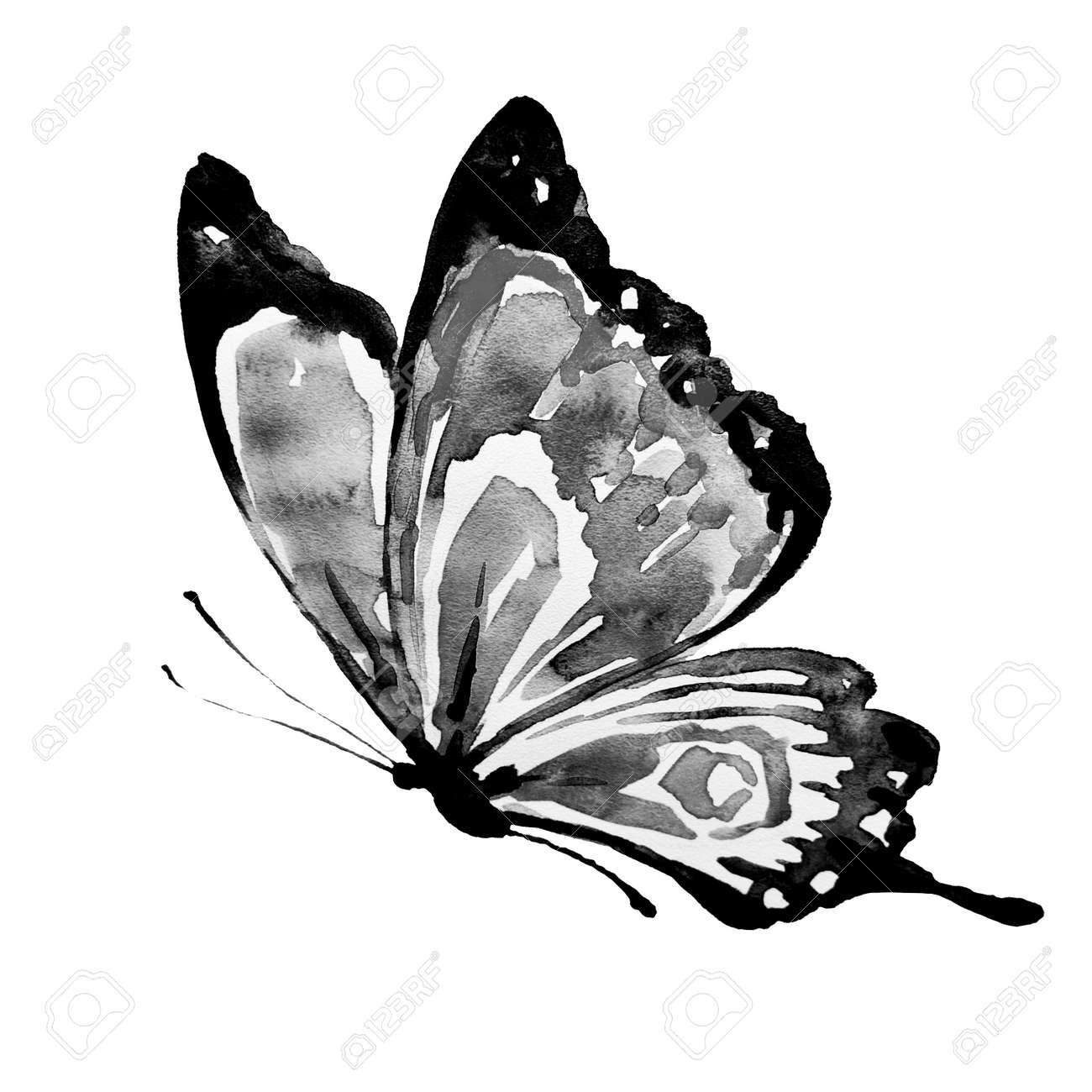 Beautiful black butterflywatercolorisolated on a white