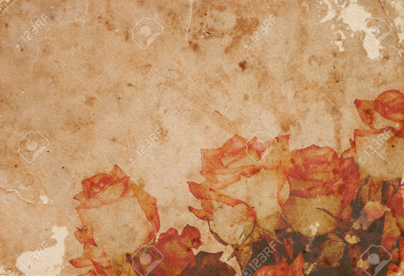 warm rose in vintage paper background stock photo, picture and
