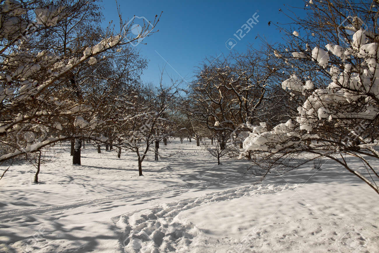 Winter landscape in a sunny day in middle of a tree plant Stock Photo - 20554589