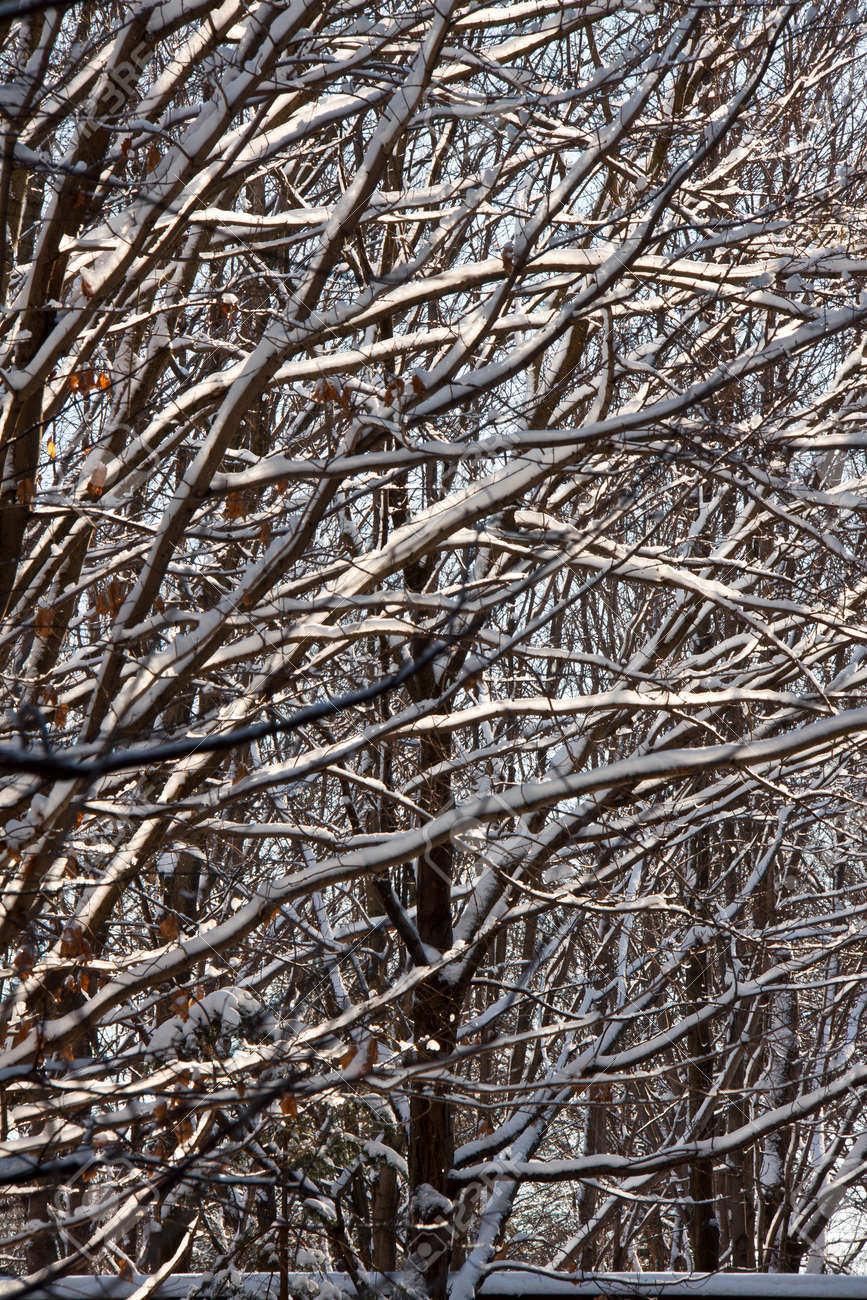Branches net in the forest in winter with snow Stock Photo - 20554680