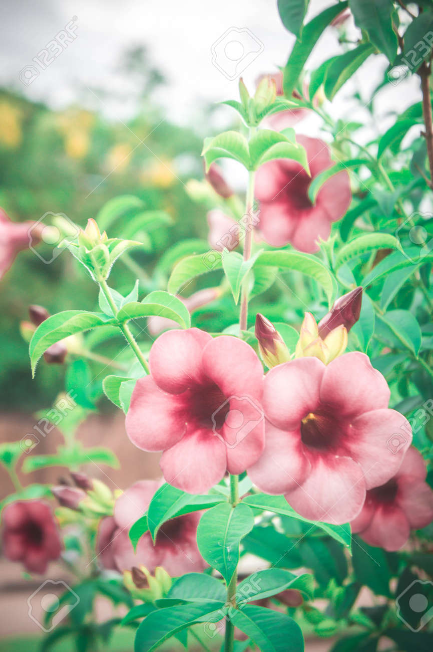 Flowers vintage pink flowers in the garden plant and filter vintage flowers vintage pink flowers in the garden plant and filter vintage lighting style in the mightylinksfo