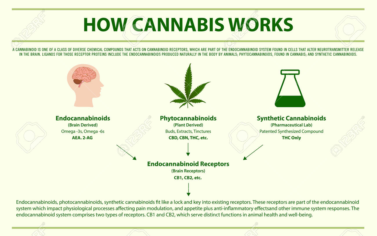 How Cannabis Works Horizontal Infographic Illustration About ...