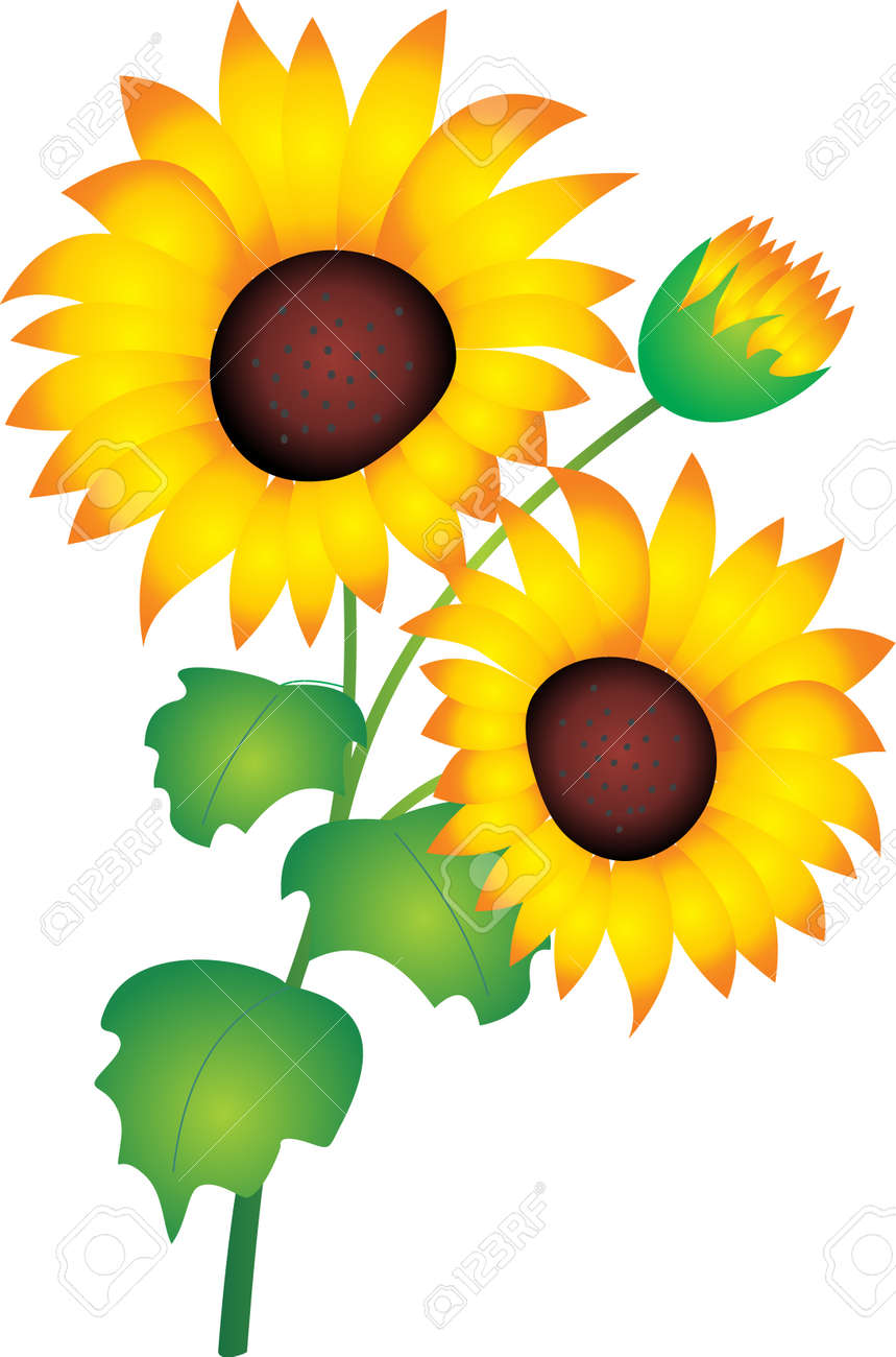sunflower vector royalty free cliparts vectors and stock rh 123rf com sunflower vector silhouette sunflower vector silhouette