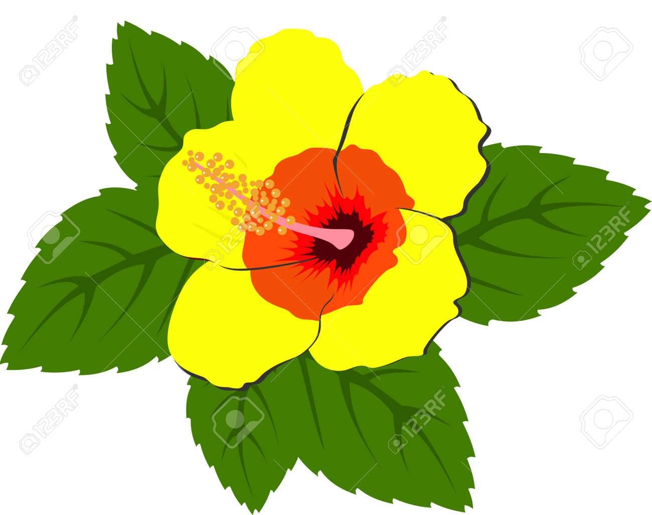 Beautiful Yellow Hibiscus Flowers With Leaves Raster Stock Photo