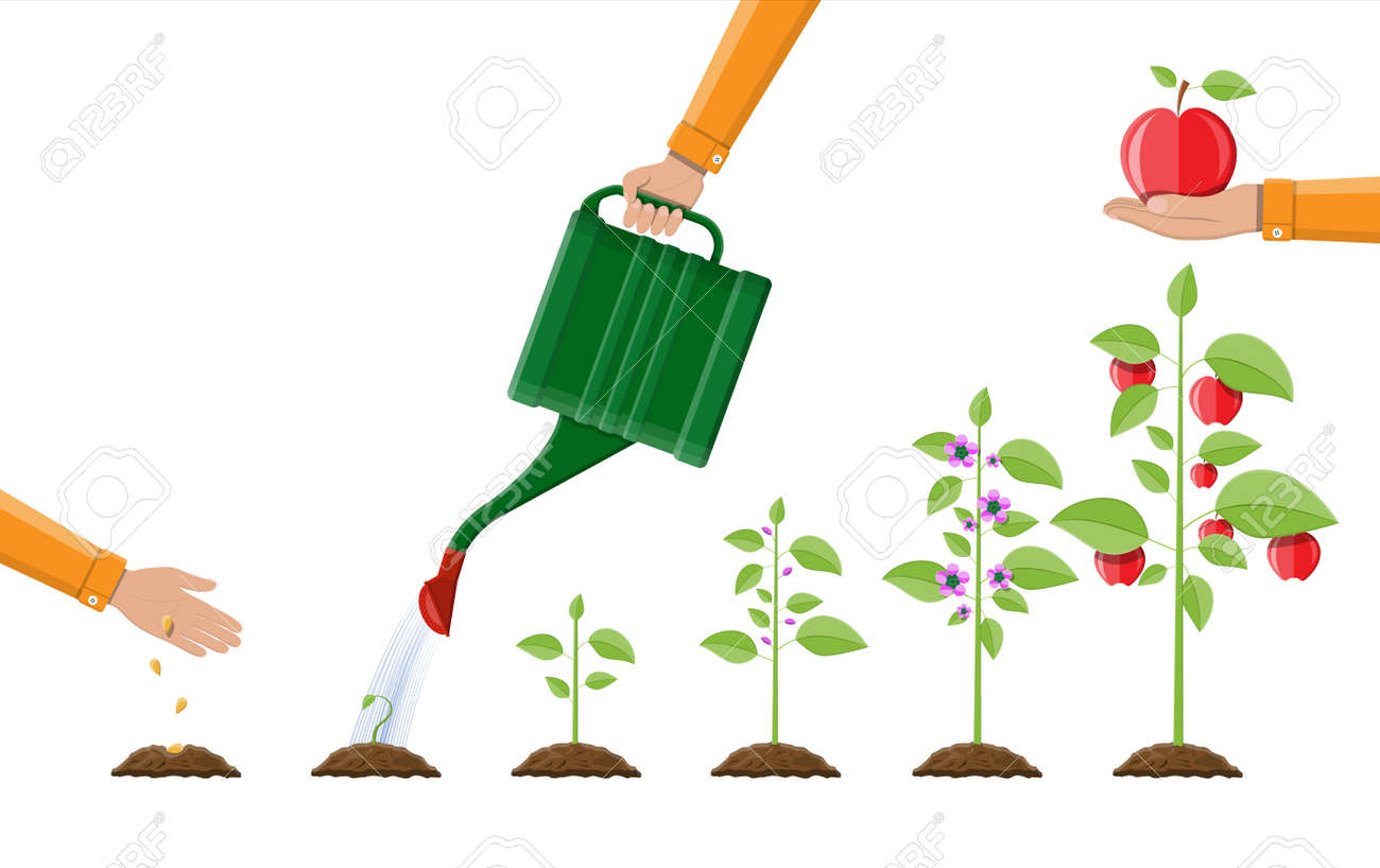 Growth of plant, from sprout to fruit. Planting tree. Seedling gardening plant. Timeline. Vector illustration in flat style - 94032811
