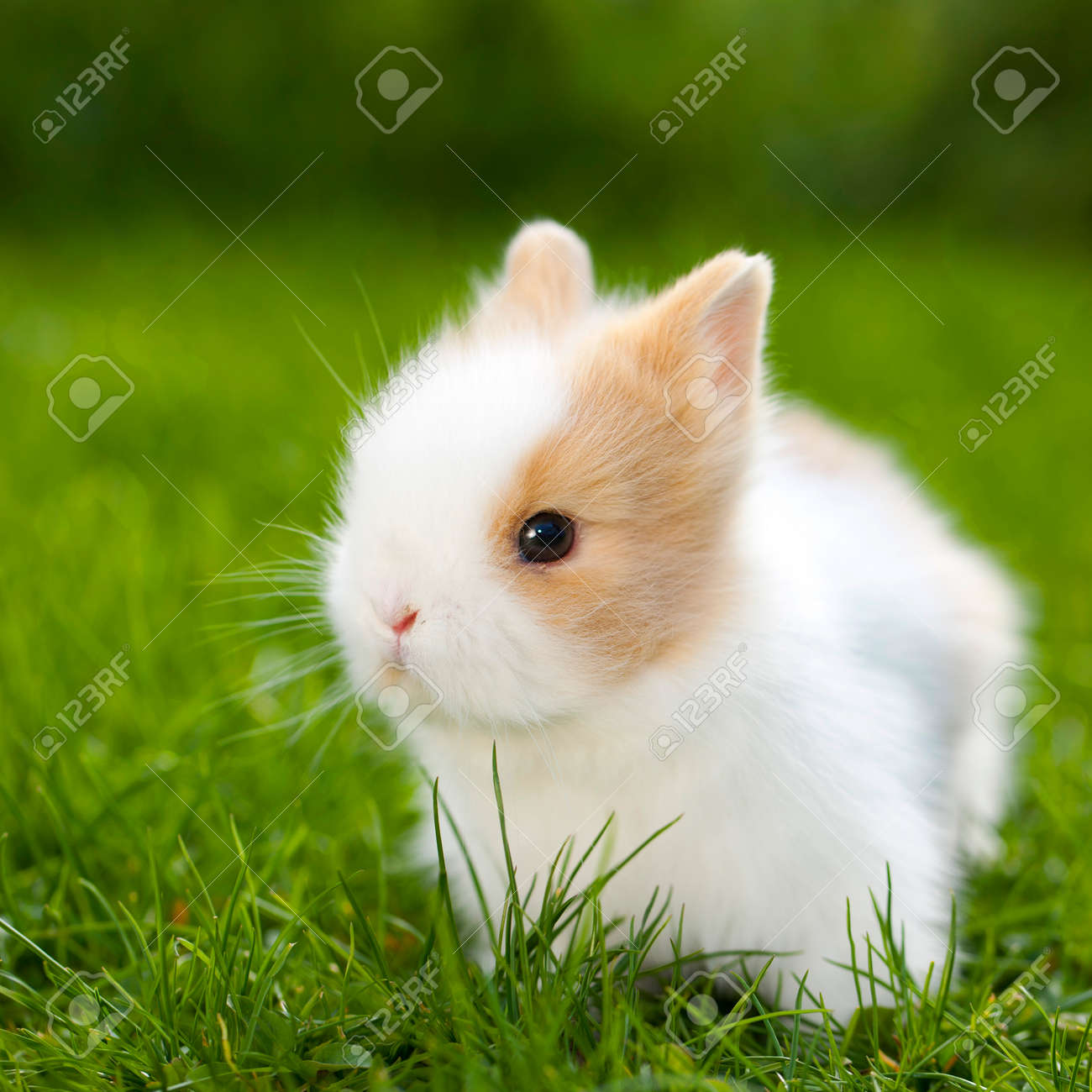 Image of: Bunny Baby Rabbit Sitting In Grassland Stock Photo 28184417 123rfcom Baby Rabbit Sitting In Grassland Stock Photo Picture And Royalty