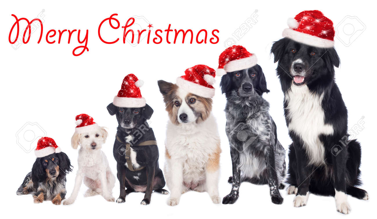 image result for merry christmas dogs