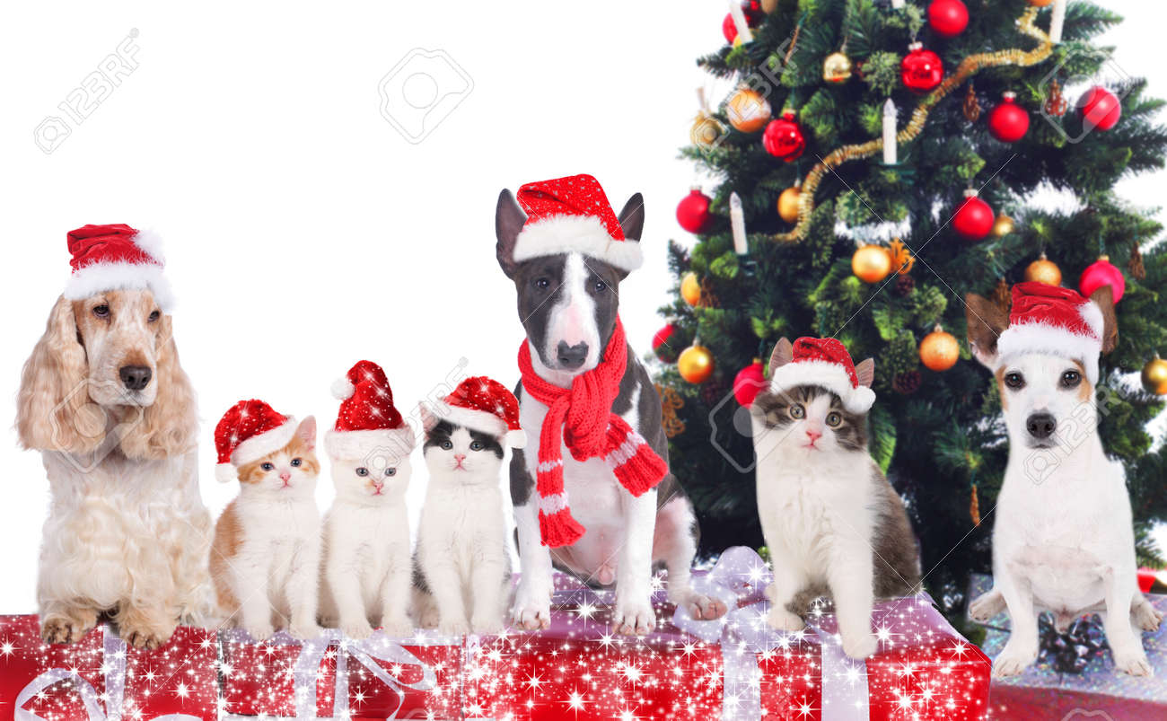 Group of cats and dogs on christmas