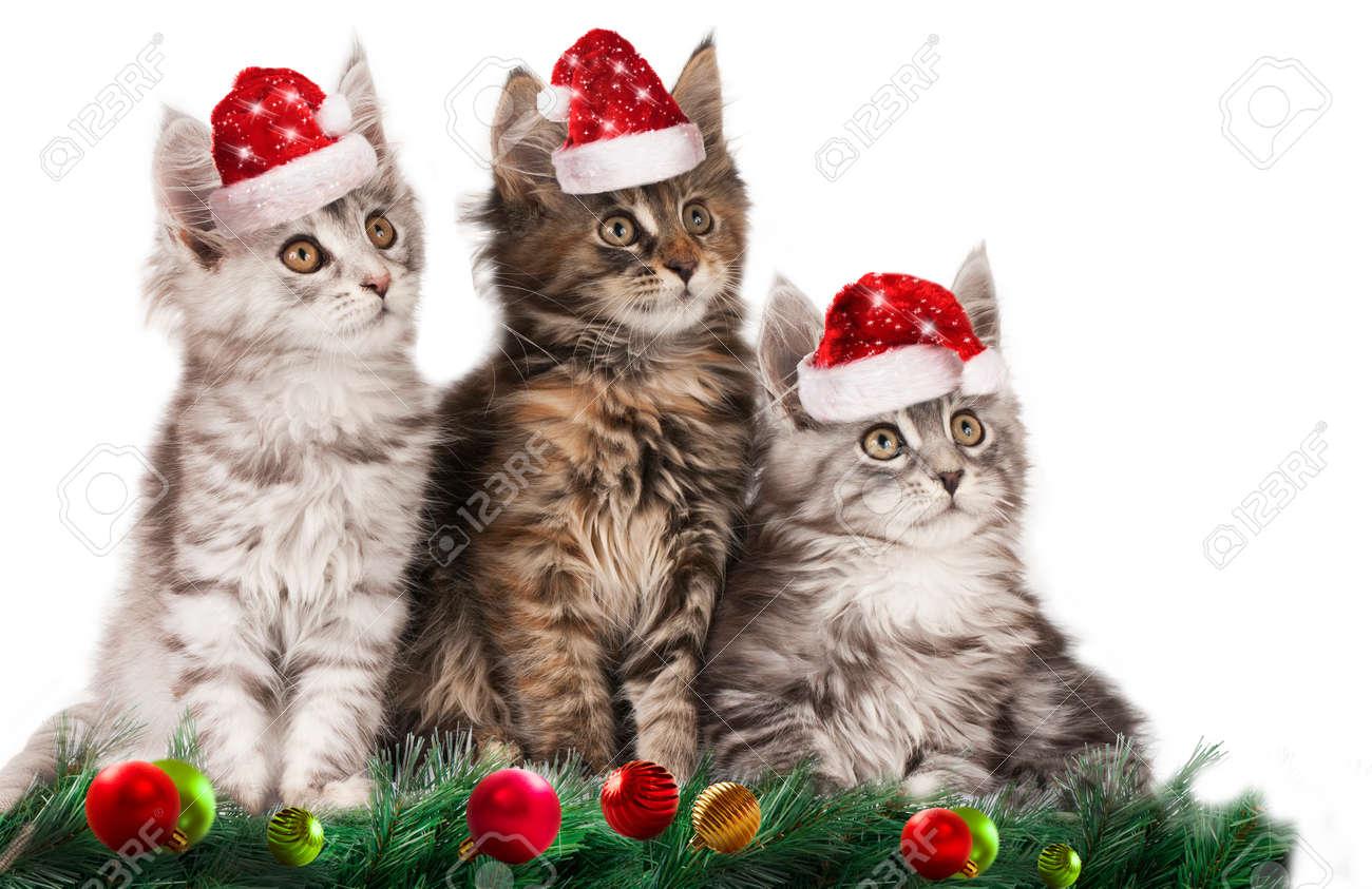 Cute christmas kitten with santa hats isolated