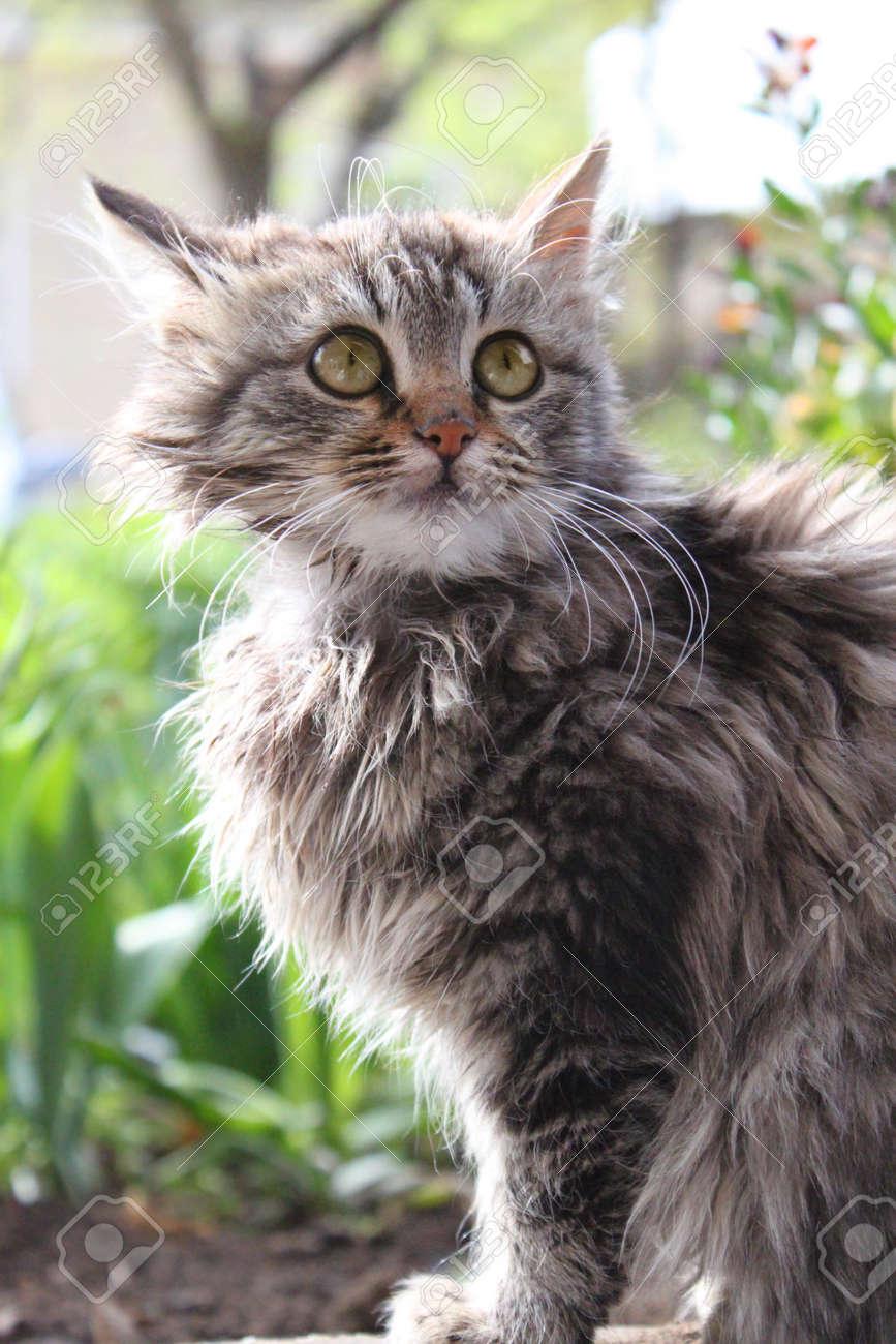 Cute fluffy kitten in the garden Animal, mammal, domestic cat - 21650653