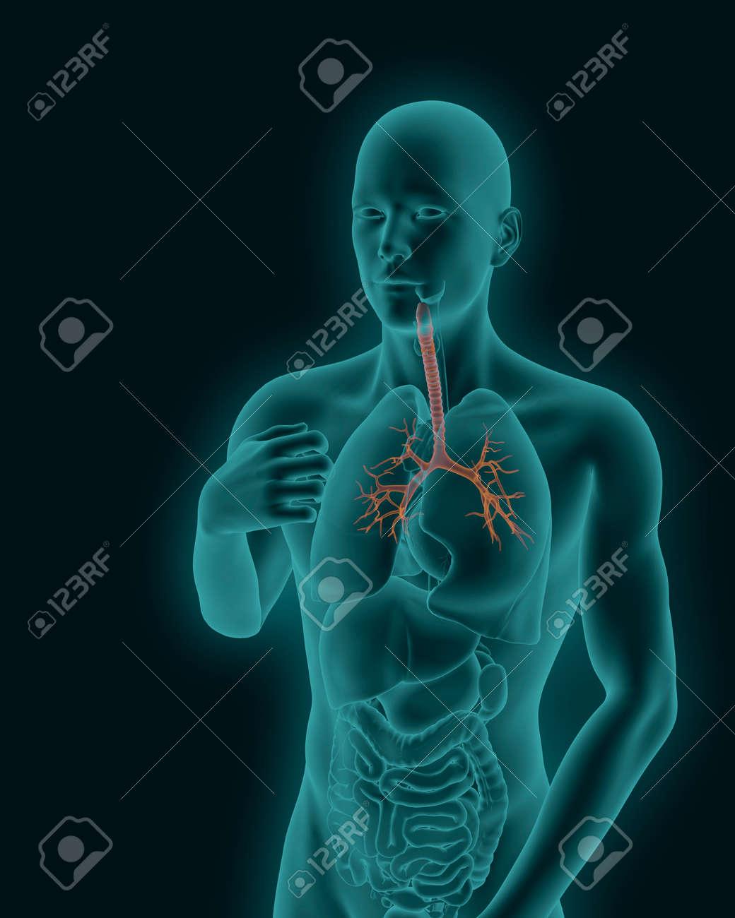 Der Menschliche Körper Röntgenscan Mit Sichtbaren Entzündeten ...