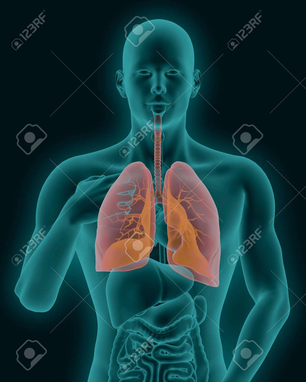 Der Menschliche Körper Röntgenscan Mit Sichtbaren Entzündeten Lunge ...