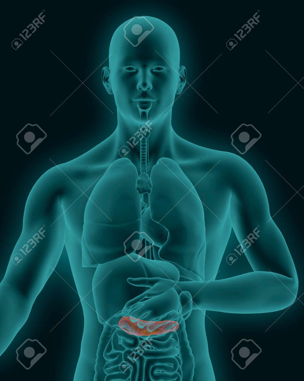 Anatomía Del Páncreas Inflamado Humanos Con Los órganos Digestivos ...
