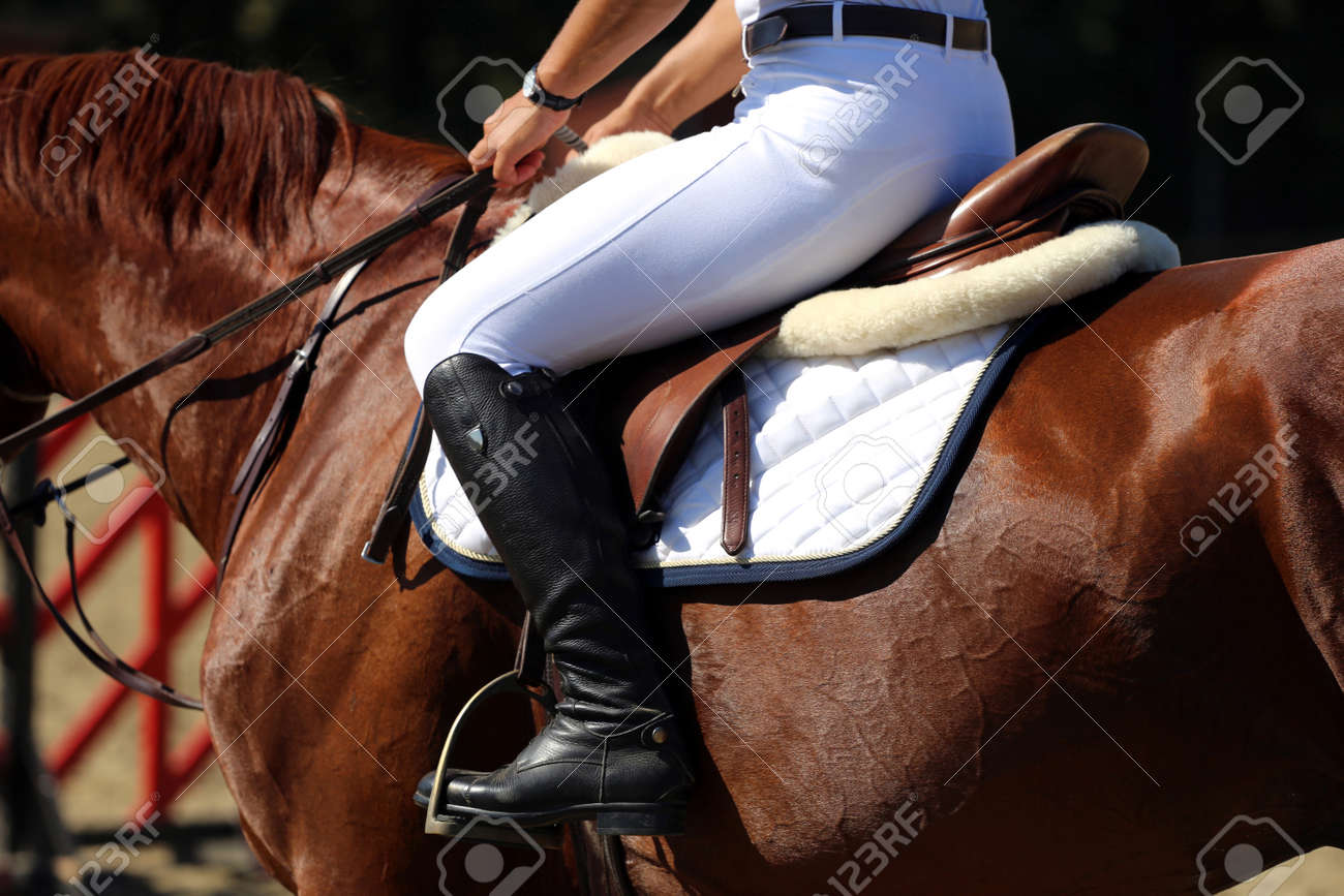 Purebred racehorse with beautiful trappings under saddle during training - 53652142