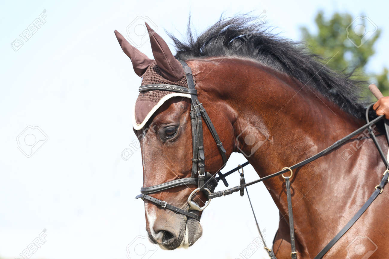 Unknown Contestant Rides At Dressage Horse Event In Riding Ground Stock Photo Picture And Royalty Free Image Image 107794921