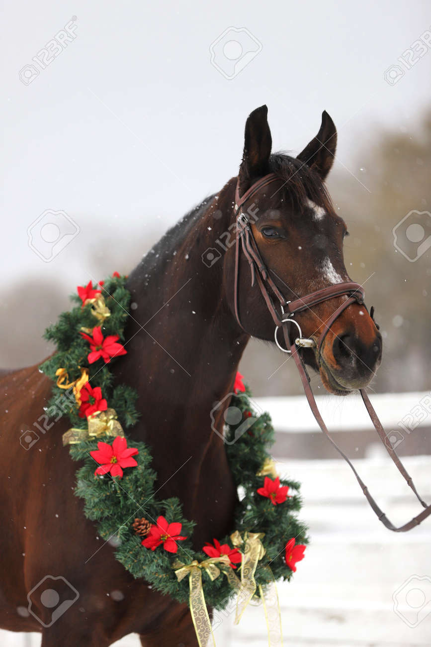 Picture Of A Purebred Horse Wearing Beautiful Christmas Garland Stock Photo Picture And Royalty Free Image Image 115419968