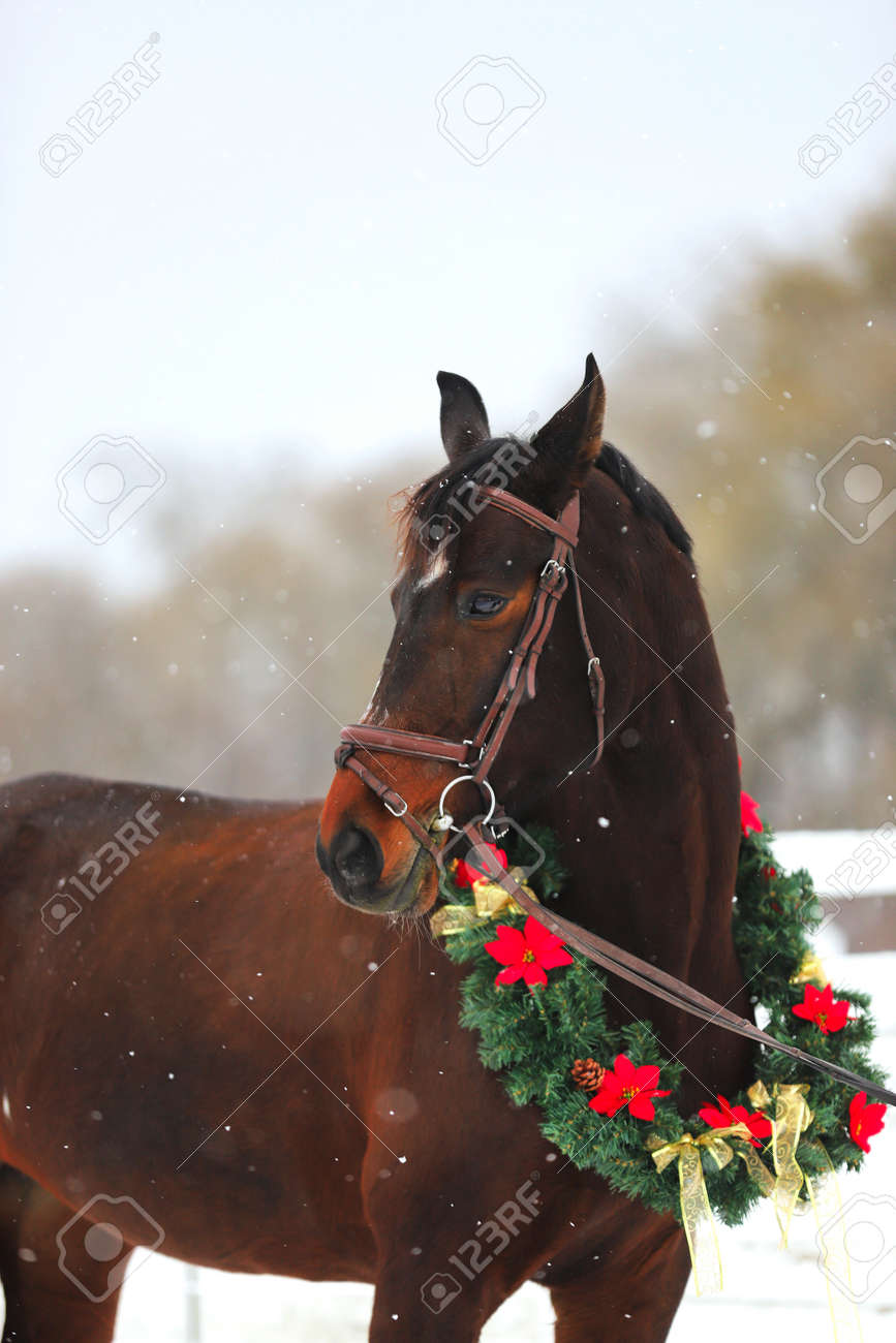 Christmas Horse Decorations.Picture Of A Purebred Horse Wearing Beautiful Christmas Garland
