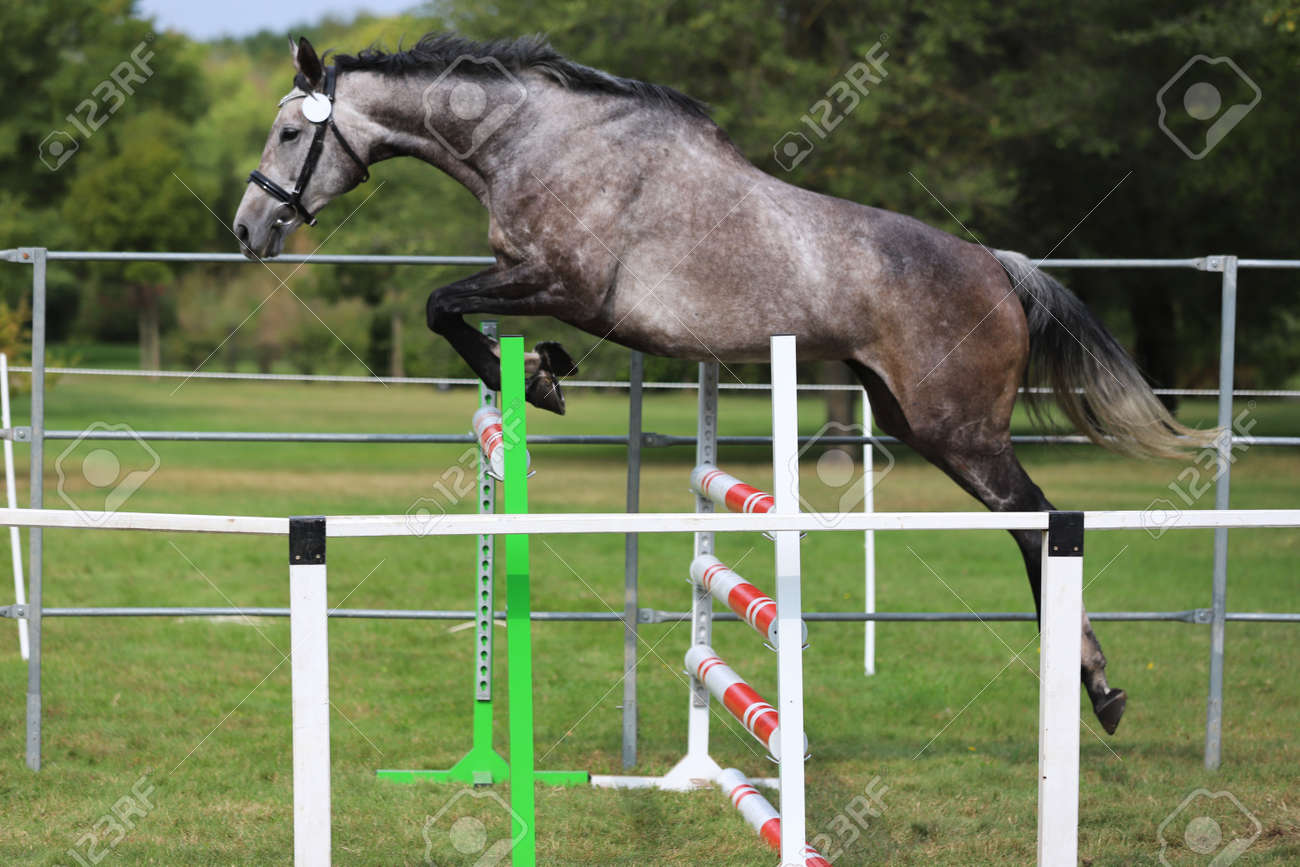 Young Beautiful Sport Horse Free Jumps Over A Hurdle Open Air Stock Photo Picture And Royalty Free Image Image 135012721