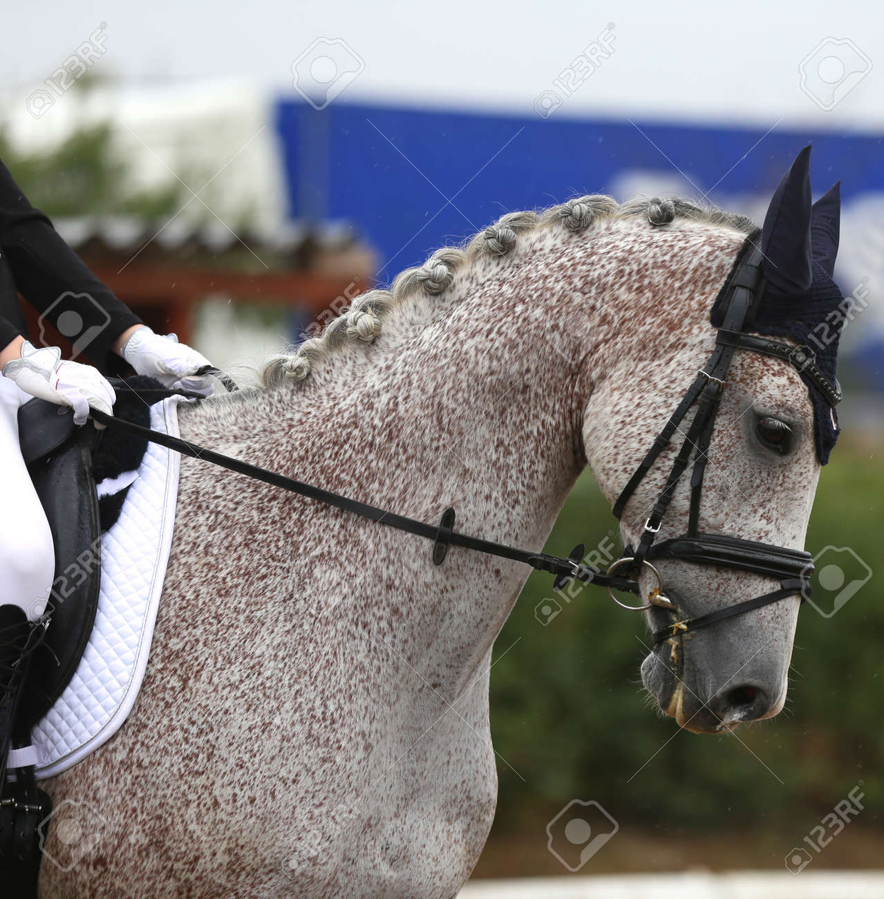Unknown Contestant Rides At Dressage Horse Event In Riding Ground Stock Photo Picture And Royalty Free Image Image 138020365