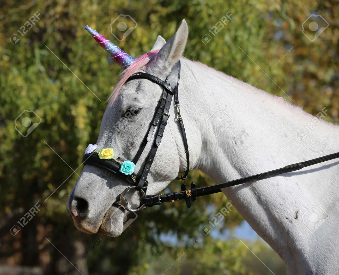 Beautiful Magical Unicorn Horse Realistic Photography Stock Photo Picture And Royalty Free Image Image 138174628