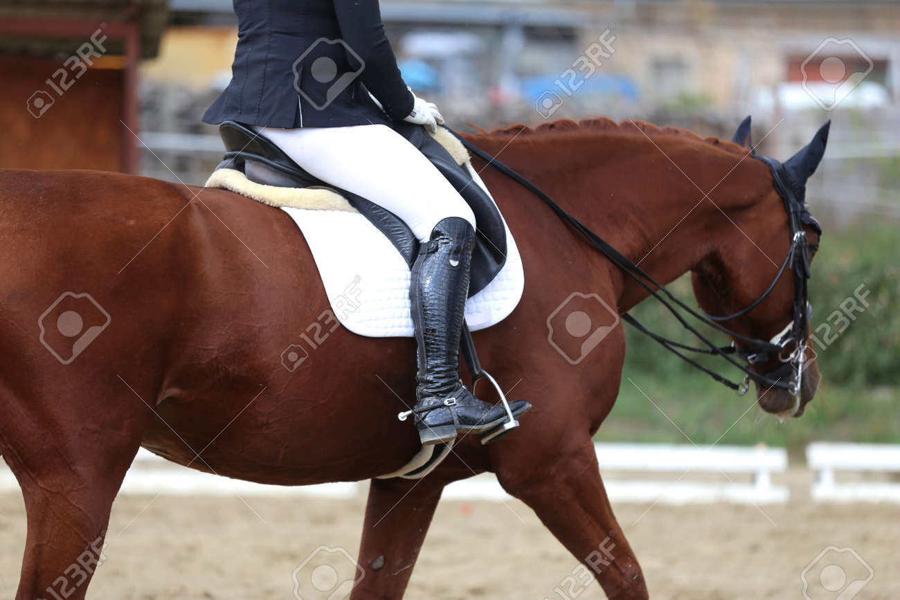 Dressage Horse Under Saddle On Equestrian Event Summertime Stock Photo Picture And Royalty Free Image Image 138447862