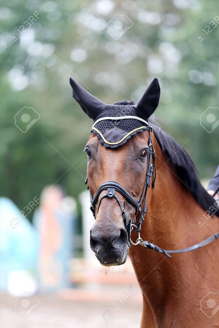 Unknown contestant rides at dressage horse event in riding ground. Head shot close up of a dressage horse during a competition event - 164687073