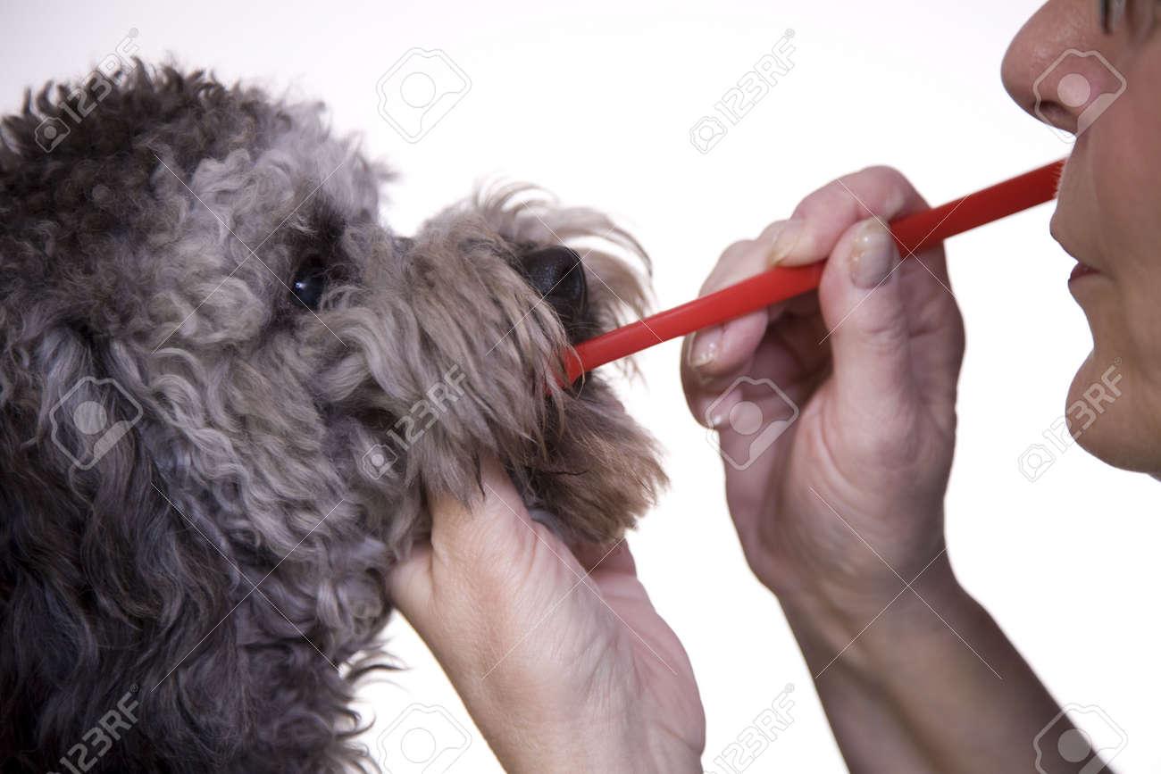 Dog dental health Stock Photo - 2582962