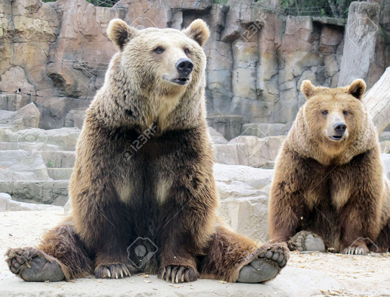 grizzly Stock Photo - 18152757
