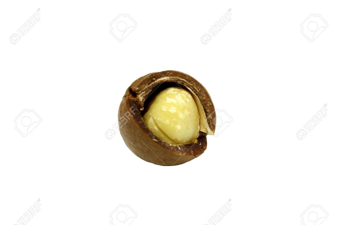 Macadamia nut. Part of the nut shell is split. The fruit of a tree plant. High-calorie. The nut is rich in vitamins and fats. Isolated on a white background - 145007740