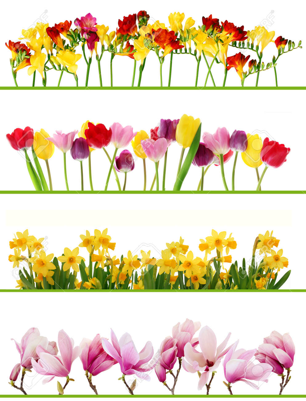 Colorful Fresh Spring Flowers Borders On White Background Tulips