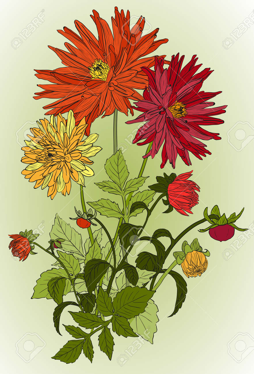 Bouquets Of Beautiful Flowers Of Garden Asters Royalty Free Cliparts ...